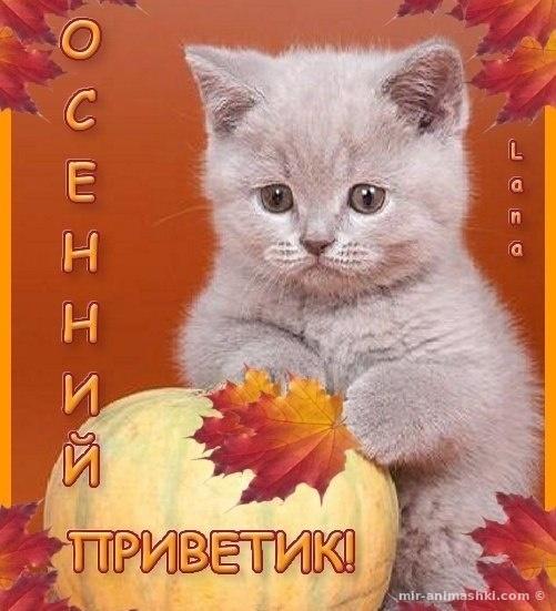 Осенний приветик - Осень поздравительные картинки