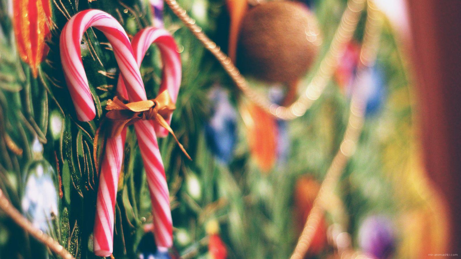 Леденцы на Рождество - C Рождеством Христовым поздравительные картинки