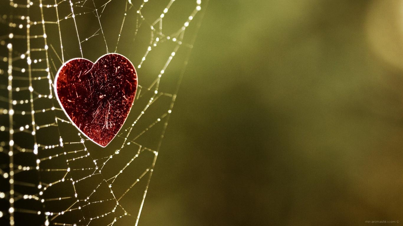Сердечко на паутине - С днем Святого Валентина поздравительные картинки