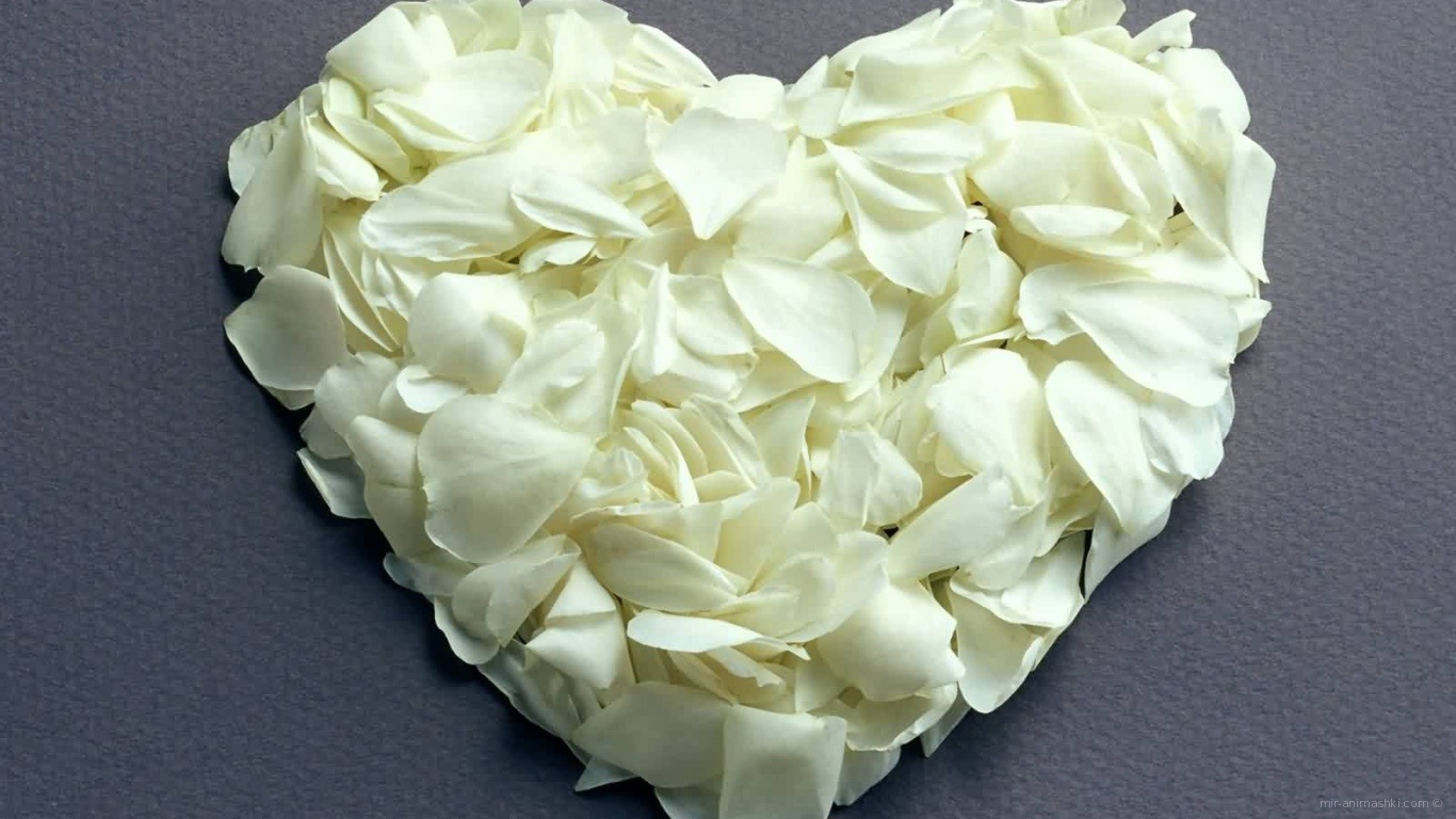 Сердце из белых лепестков на День Влюбленных 14 февраля - С днем Святого Валентина поздравительные картинки
