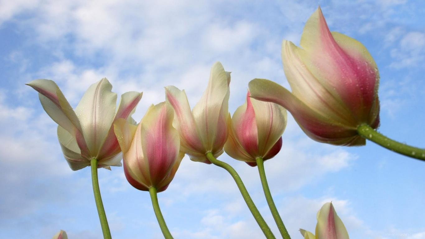 Цветы женщинам на 8 марта - C 8 марта поздравительные картинки