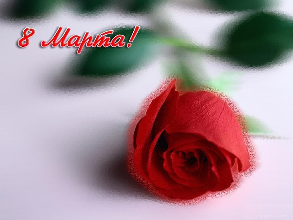 Красная роза - C 8 марта поздравительные картинки