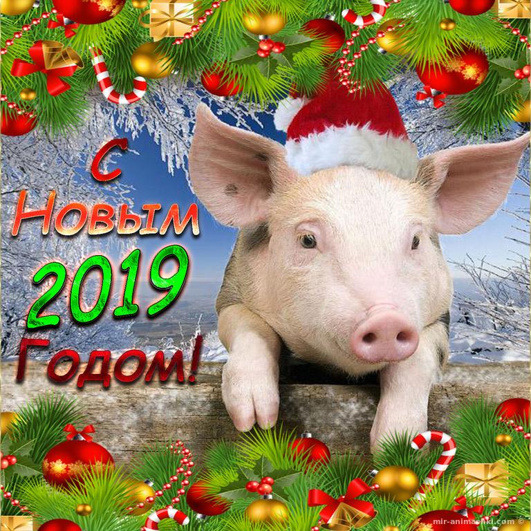 Открытка со свиньей на Новый 2019 год - C наступающим новым годом 2019 поздравительные картинки