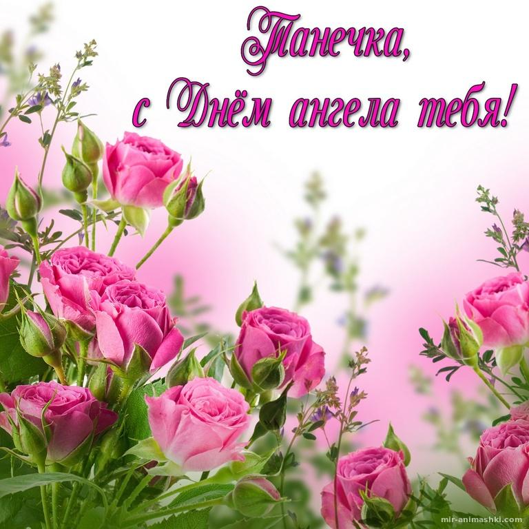 Розовые розы Танечке на День ангела - Татьянин День поздравительные картинки