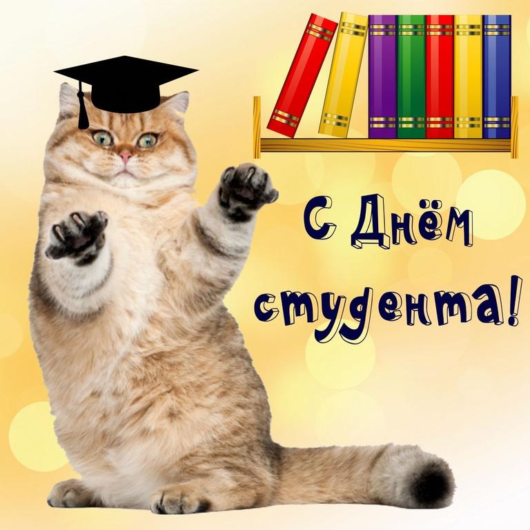 Серьезный котик поздравляет с Днем студента - С днем студента поздравительные картинки