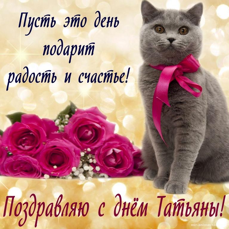 Красивый котик желает счастья в День Татьяны - Татьянин День поздравительные картинки