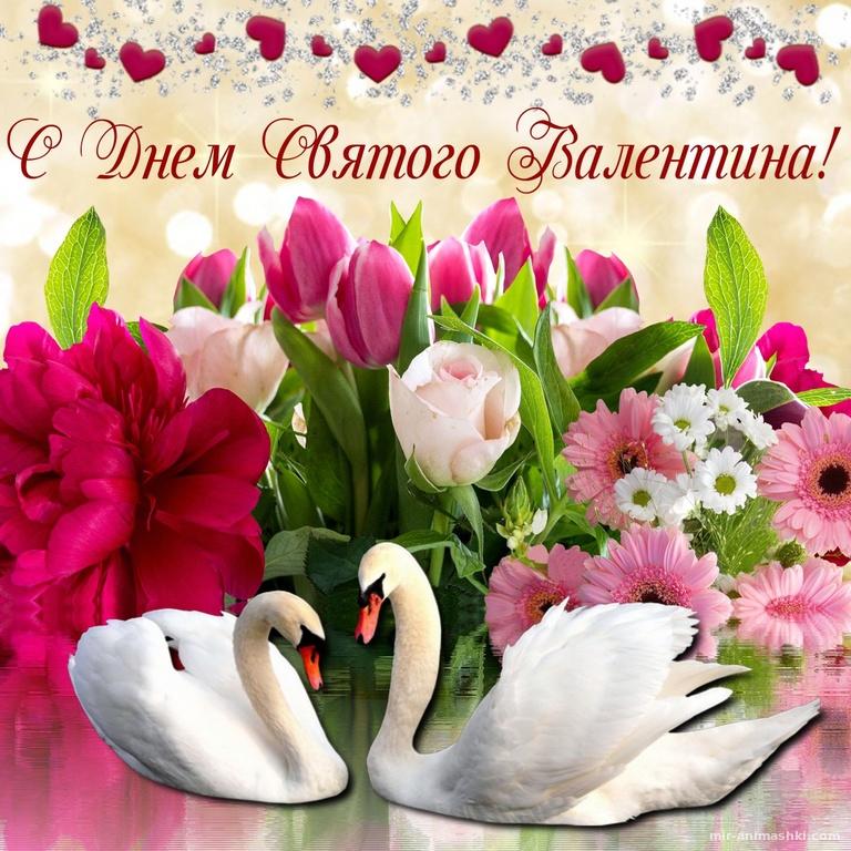 Белые лебеди на фоне цветов - С днем Святого Валентина поздравительные картинки