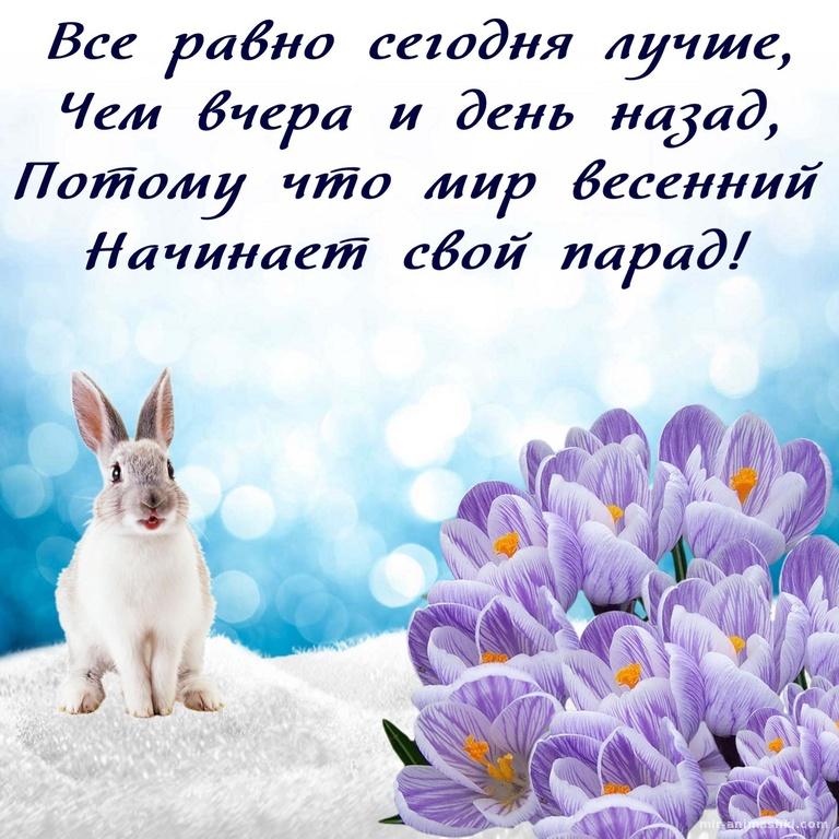 Зайчик на снегу и весенние цветы - Весна поздравительные картинки