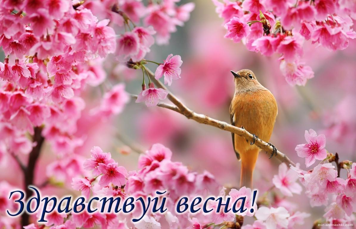 Птичка на ветке среди розовых цветов - Весна поздравительные картинки