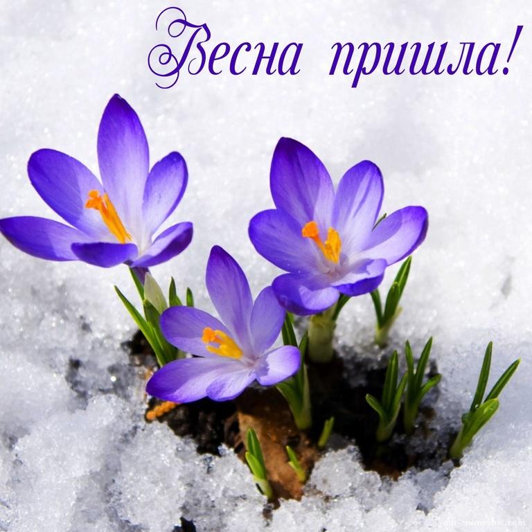 Цветы пробивающиеся из под снега - Весна поздравительные картинки