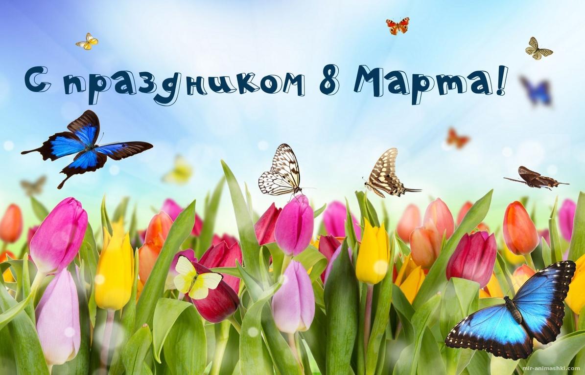 Бабочки над цветочным полем на 8 марта - C 8 марта поздравительные картинки