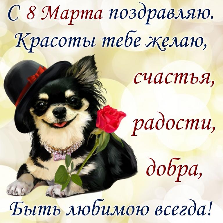 Собачка в шляпке с красной розой - C 8 марта поздравительные картинки
