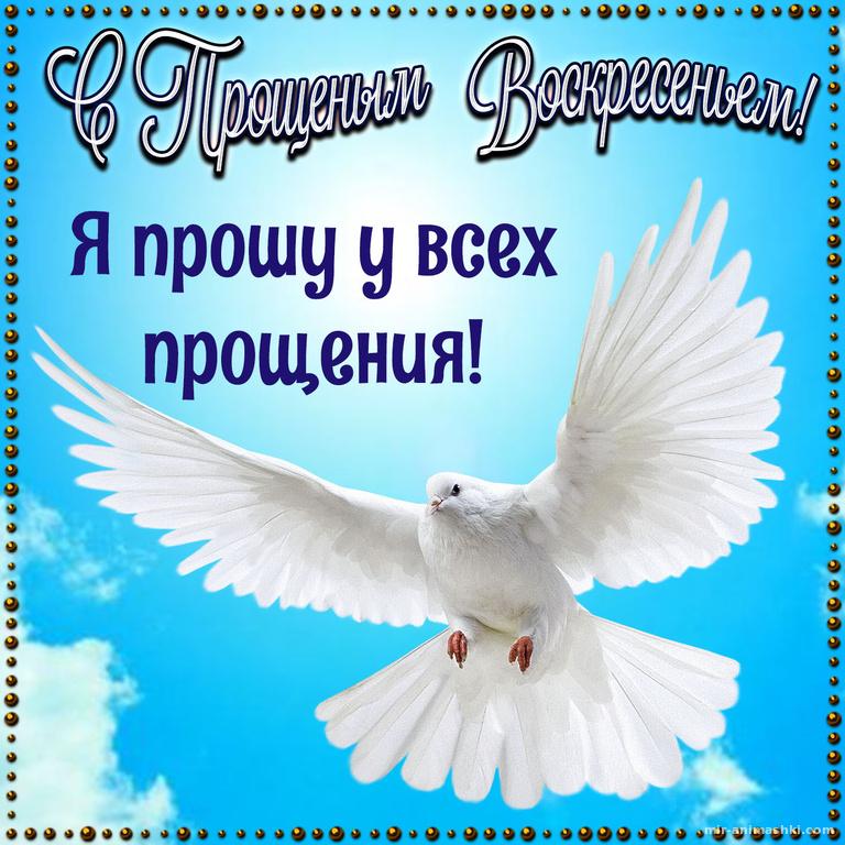 Голубь в рамке на Прощеное Воскресенье - Прощенное воскресенье поздравительные картинки