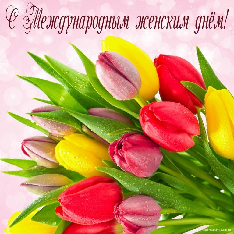 Букет тюльпанов в капельках росы - C 8 марта поздравительные картинки