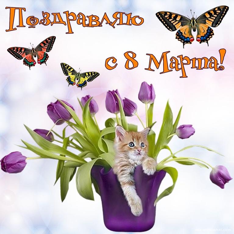 Котик в вазе с цветами на 8 марта - C 8 марта поздравительные картинки