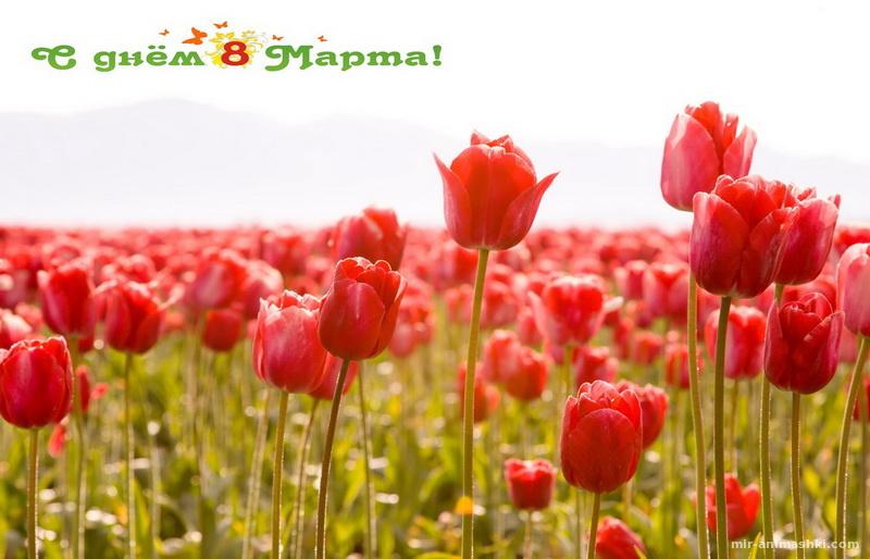 Картинка с тюльпанами к 8 марта - C 8 марта поздравительные картинки