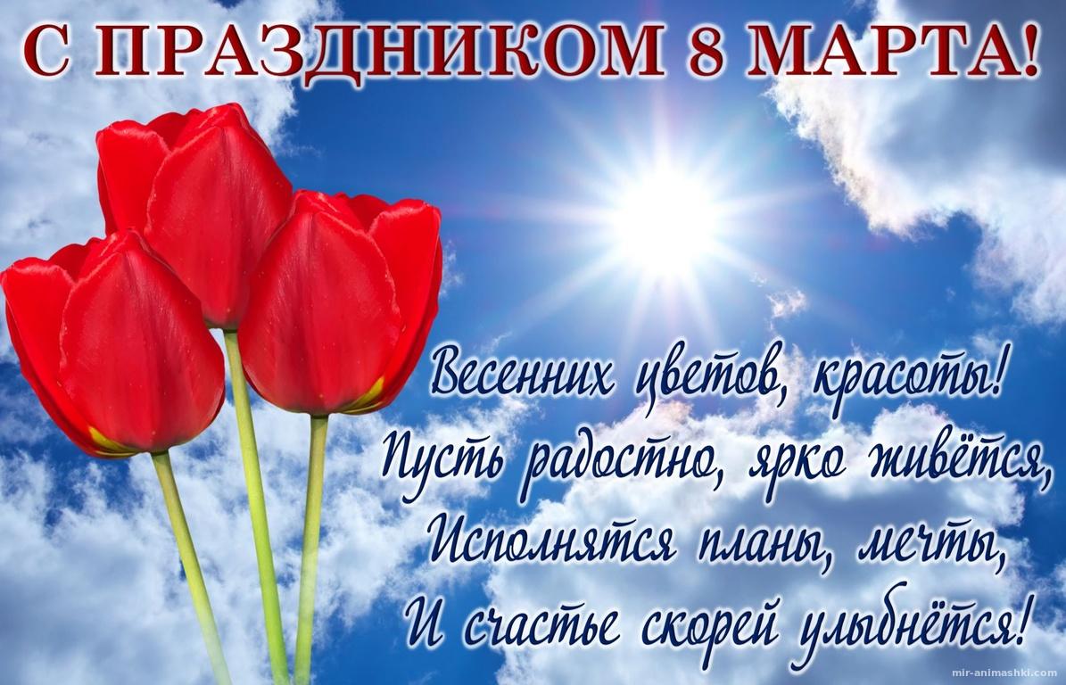 Тюльпаны и пожелание в синем небе - C 8 марта поздравительные картинки