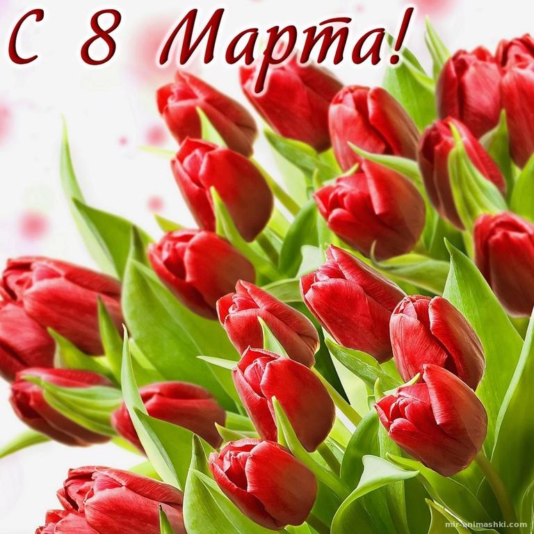 Море красных тюльпанов на 8 марта - C 8 марта поздравительные картинки