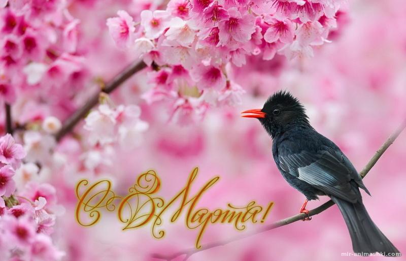 Картинка с 8 марта - C 8 марта поздравительные картинки