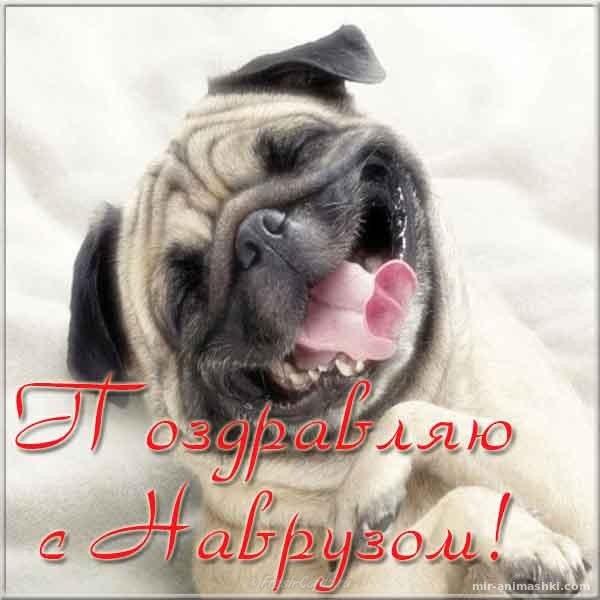 Навруз фото картинка поздравление - Навруз — Наурыз Мейрамы поздравительные картинки