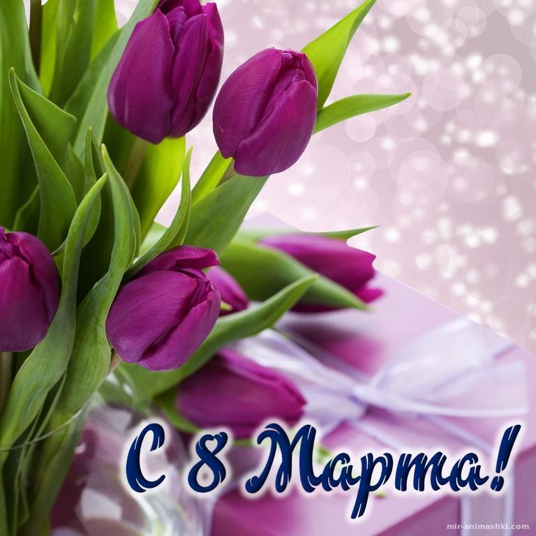 Фиолетовые тюльпаны на блестящем фоне - C 8 марта поздравительные картинки