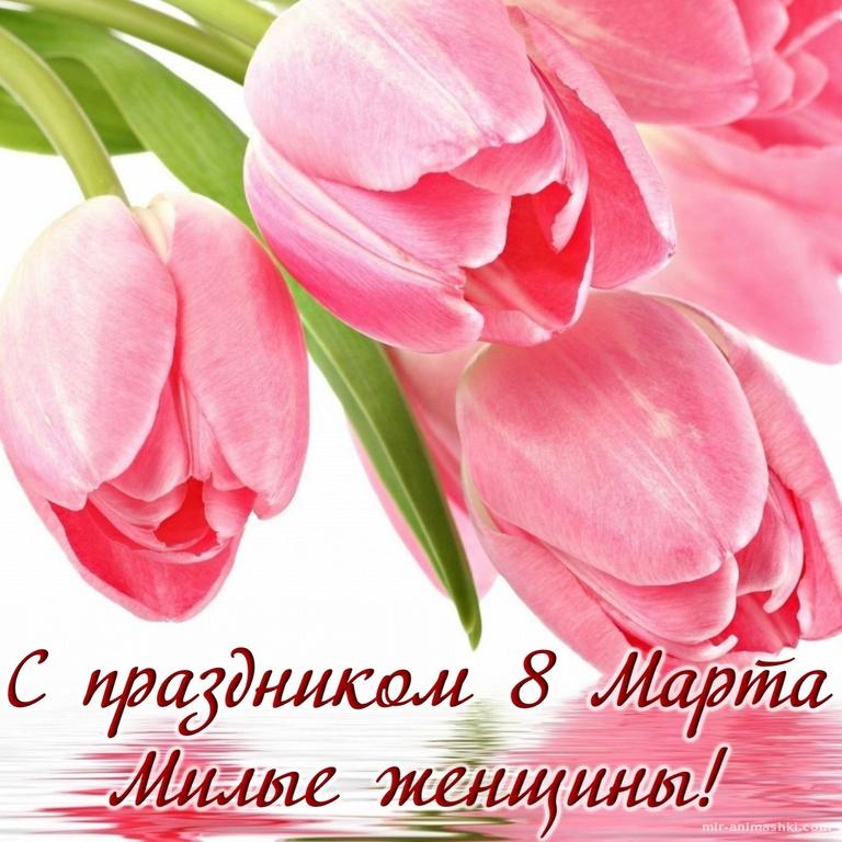 Розовые тюльпаны для милых женщин - C 8 марта поздравительные картинки