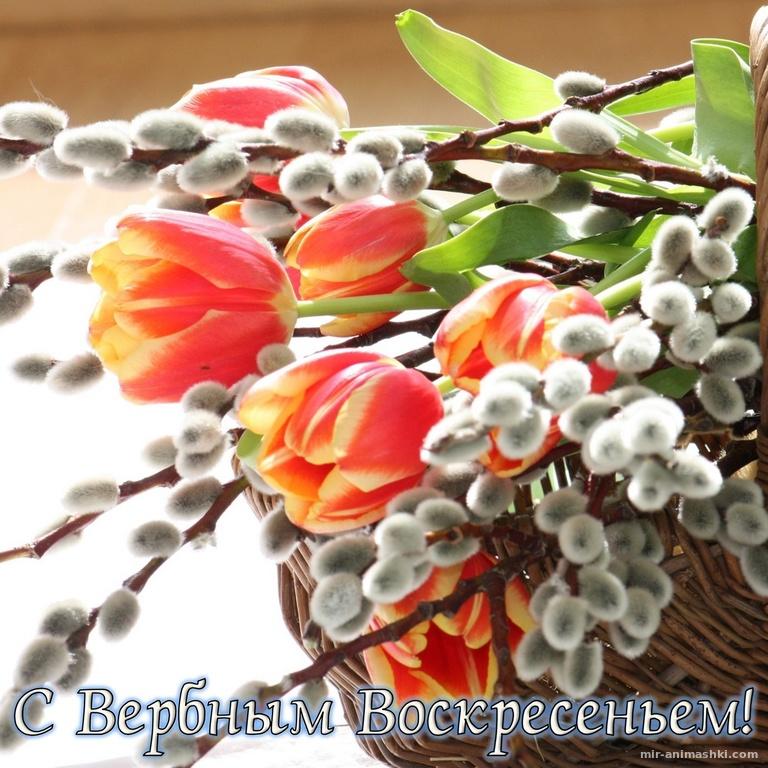 Красивые цветы на Вербное Воскресенье - С Вербным Воскресеньем поздравительные картинки