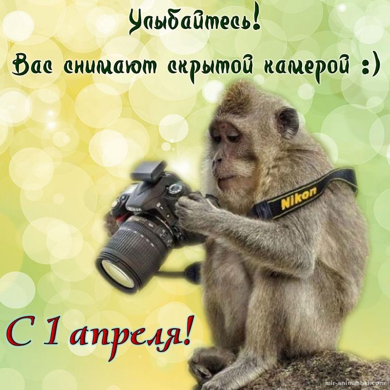 Обезьянка с фотоаппаратом к 1 апреля - 1 апреля день смеха поздравительные картинки