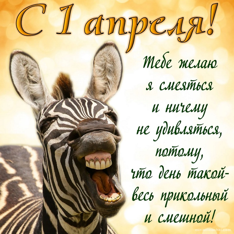 Смешная зебра с пожеланием на 1 апреля - 1 апреля день смеха поздравительные картинки