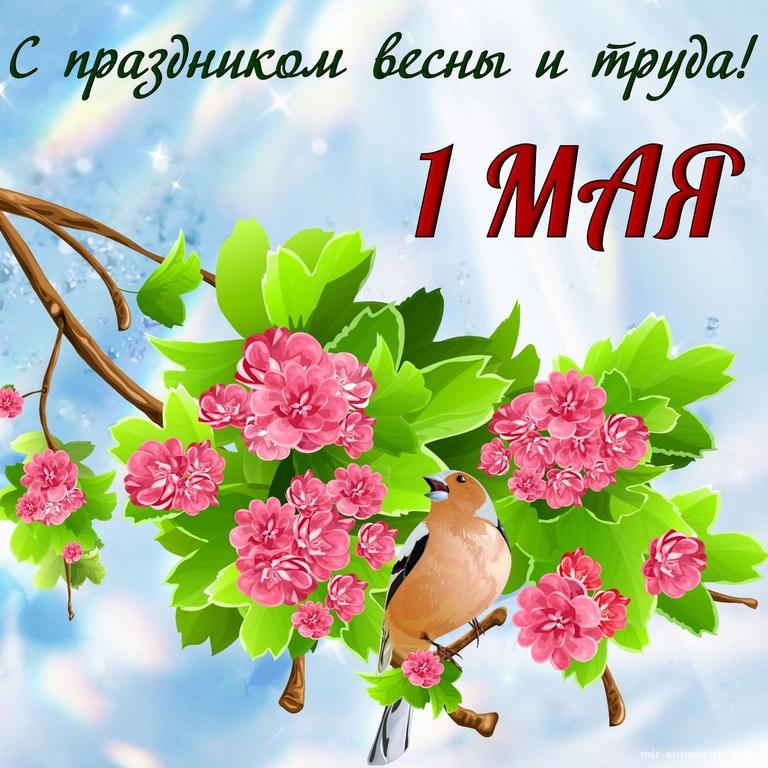 Открытка на первый майский день - Поздравления с 1 мая поздравительные картинки
