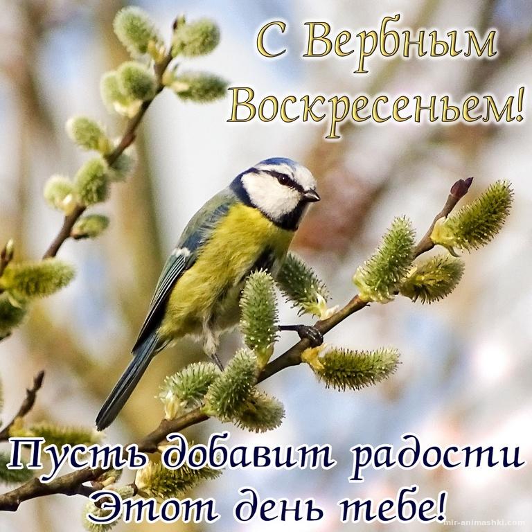 Открытка с птичкой на вербе и пожеланием - С Вербным Воскресеньем поздравительные картинки