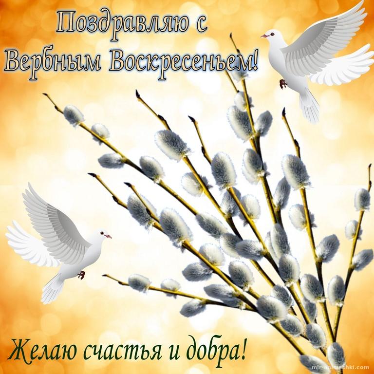Поздравление с вербой и белыми голубями - С Вербным Воскресеньем поздравительные картинки