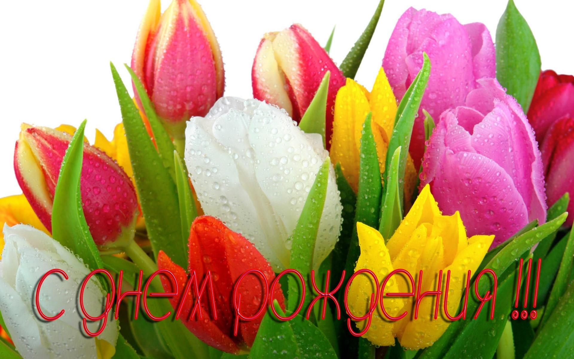Тюльпаны на день рождения - С Днем Рождения поздравительные картинки