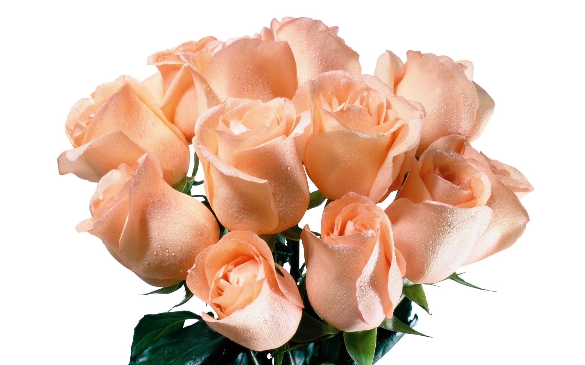 Розовый букет в день рождения - С Днем Рождения поздравительные картинки