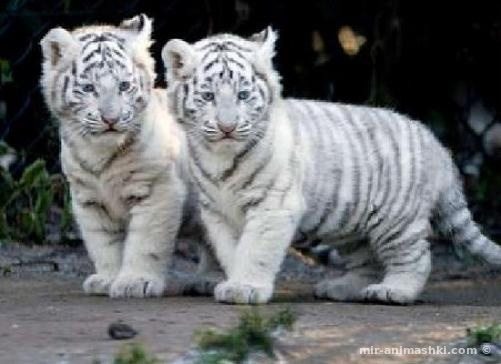Всемирный день защиты животных - 4 октября 2020
