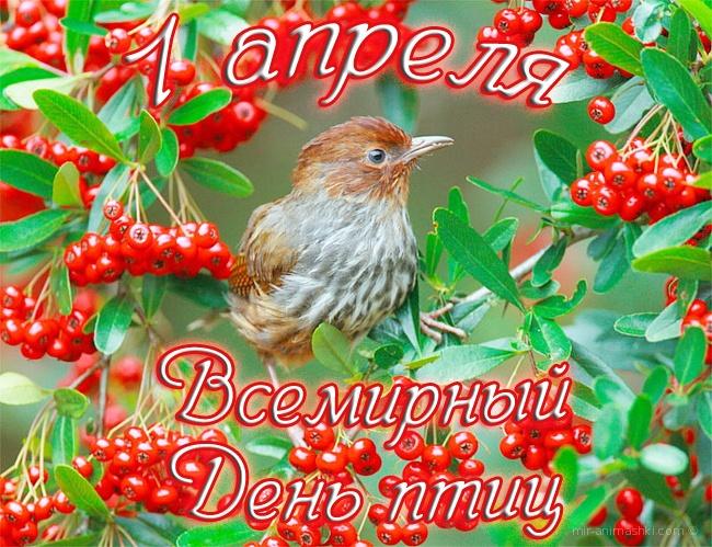 Поздравительная открытка на Международный день птиц - 1 апреля 2021