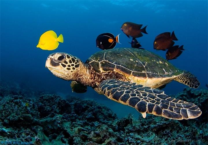 Всемирный день черепахи - 23 мая 2020