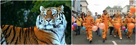 Международный день тигра - 29 июля 2020