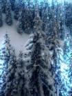 Зимний пейзаж - Блестяшки на телефон открытки и картинки