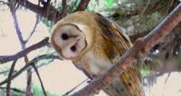 Прикольная сова на ветке - Живые фотографии открытки и картинки