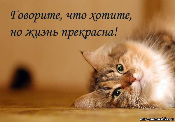 кошка с позитивом~Кошки