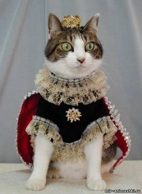 Кошка-королева~Кошки