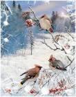 Свиристели в зимнем лесу - Зима открытки и картинки