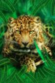Леопард в траве - Фото животных открытки и картинки