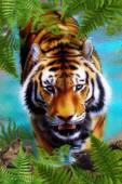 Уссурийский тигр - Фото животных открытки и картинки