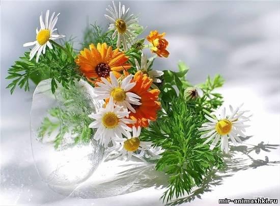 полевые цветы~Анимационные блестящие открытки GIF