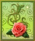 Роза на открытке - Красивые цветы открытки и картинки