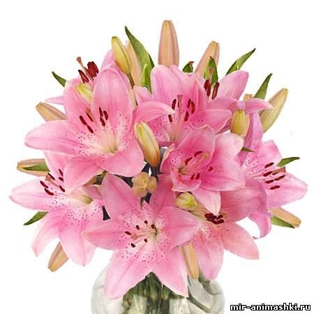 букет лилий~Разные цветы