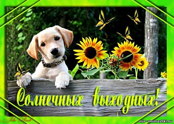 щенок с подсолнухами~Приятных выходных