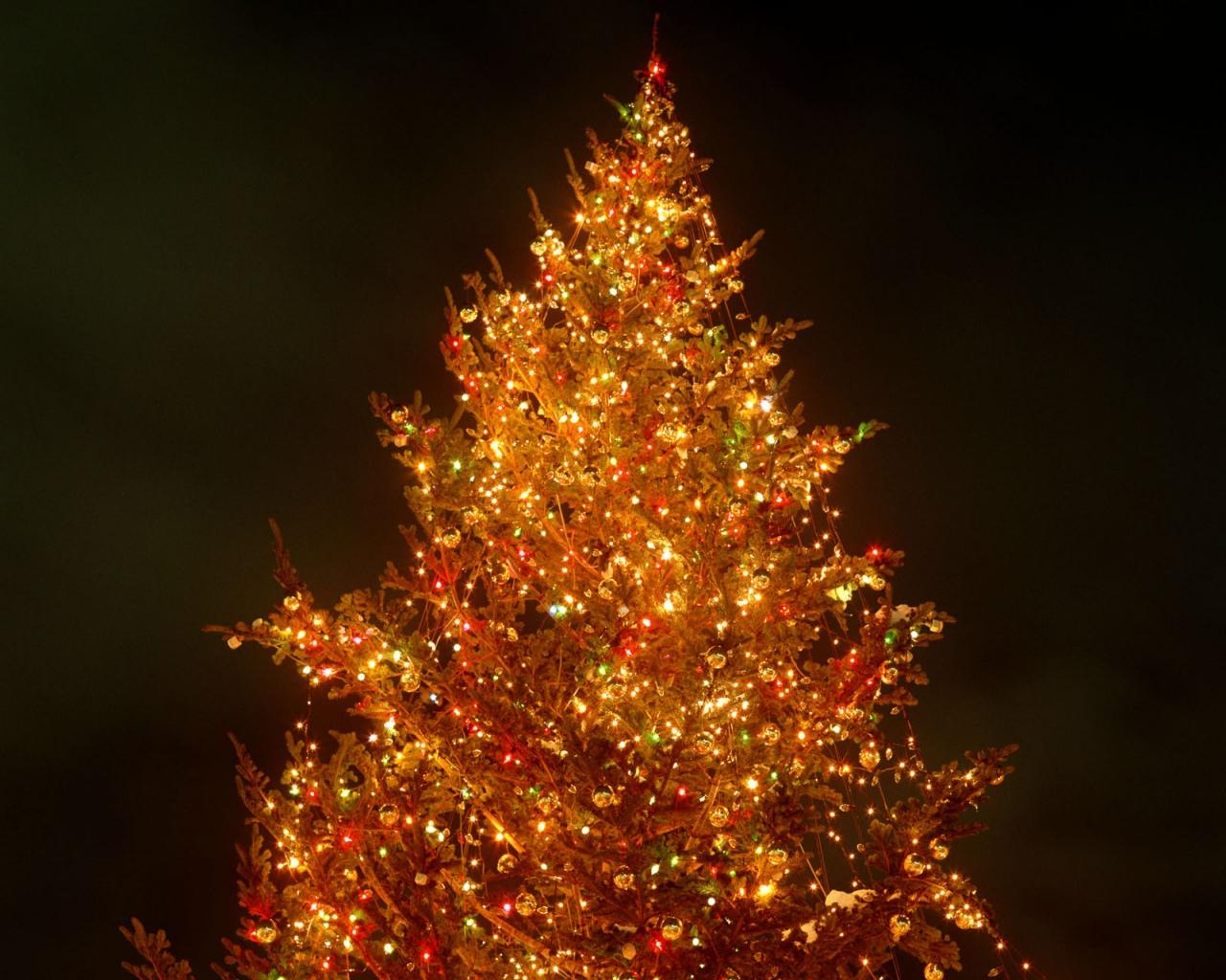 небольшие смотреть картинки елки видите